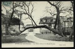 Les Vieux arbres de la Demi-lune - Fontenay-aux-Roses