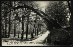 Bois de Meudon-Clamart - Sous-Bois à la Fontaine Sainte-Marie - Meudon