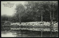 Forêt de Meudon - Moutons s'abreuvant au bord de l'étang - Meudon