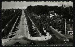 Allée d'honneur - Bourg-la-Reine