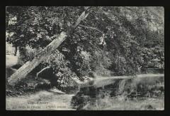Les Bords de l'Etang - l'Arbre penché 92 Ville-d'Avray
