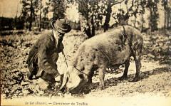 Lot chercheur de truffes