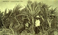 Martinique Coupe de la canne à sucre