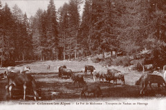 Environs de Colmars les Alpes - Le Pré Michonne –  - Colmars