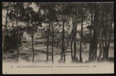 Ile-de-Bréhat - A travers les sapins du Port-Clos 22 Île-de-Bréhat