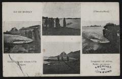 Ile-de-Bréhat - Baleine capturée vivante à l'île Biniguet 22 Île-de-Bréhat
