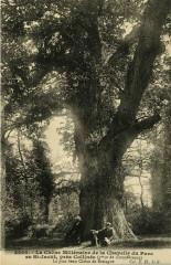 Saint-Jacut-du-Mené - Chêne millénaire de la chapelle du Parc - Le Mené