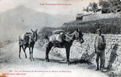 Pic Du Belmatx Et Muletier Sur La Route (GROS Plan Belle Cpa - Ur