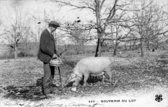 Souvenir Du Lot (CHERCHEUR Truffes Avec Un Cochon (dos non divisé)