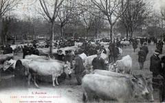 Pamiers Foire aux Boeufs (SUR Le Marche Beau Cliche TOP!! - Pamiers