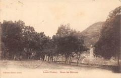 20 Corse Levie Sous Les Oliviers (cpa rare - Levie