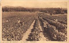 Au Pays Du Cognac Au Vignoble Vendanges - Cognac