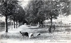 Saint Marcellin Promenade De Joud (dos non divisé) (Cpa Animee - Saint-Marcellin