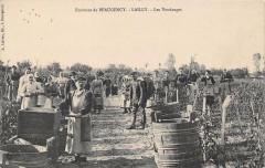 Environs De Beaugency Lailly Les Vendanges (Belle Cpa En Gros Plan - Beaugency