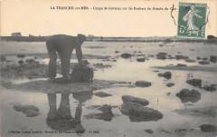 La Tranche Sur Mer Coupe De Goemon Sur Les Rochers Du Grouin Du Cou (clic - La Tranche-sur-Mer