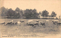 Domaine De Pontac Gasparin Salleboeuf Elevage De Betail Troupeau Au Patur - Salleboeuf