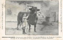 Bretagne Hippique Drusus Duchess Taureau Pur Sang Le Bras Guiclan - Guiclan