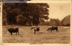 Guermantes - Landscape with Cattles  - Guermantes