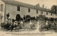 Marlieux Abbaye Cistercienne de N.D. des Dombes. La Vendage - Marlieux