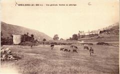 Greolieres - Vue générale - Vaches au paturage - Gréolières