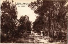 Erquy - Allée dans le Bois du Guen 22 Erquy