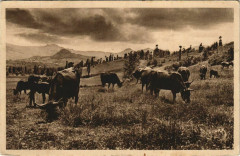 Paturage dans la Vallee de la Rhue de Cheylade France - Cheylade
