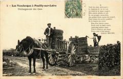 Les Vendanges Pouilly-sur-Loire Déchargement des tines - Pouilly-sur-Loire