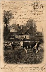 Saint-Lo - Bords de la Vire - Vaches au Paturage - Saint-Lô