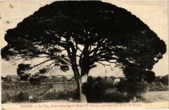 Dunes Le Pin, Arbre sous lequel Henri Iv dejeuna pendant une - Dunes