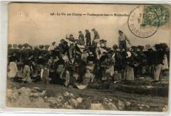La Vie aux Champs - Vendangeurs dans le Monbazillac - Monbazillac