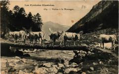 Vaches a la Montagne - Mont