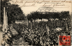 Cenon - Vignoble et chateau dumune - Cenon
