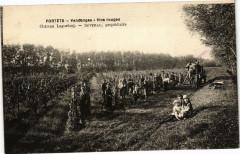 Portets - Vendanges - Vin rouges - Portets