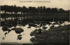 Léon - L'Hiver dans les Landes - Grues Surprises dans une Lagune - Léon