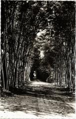 Domaine de Prafrance par Generargues - Allée de Bambous - Générargues
