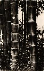 Domaine de Prafrance par Generargues - Bambous Géants... - Générargues