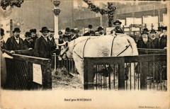Boeuf gras Nivernais - Paris 19e