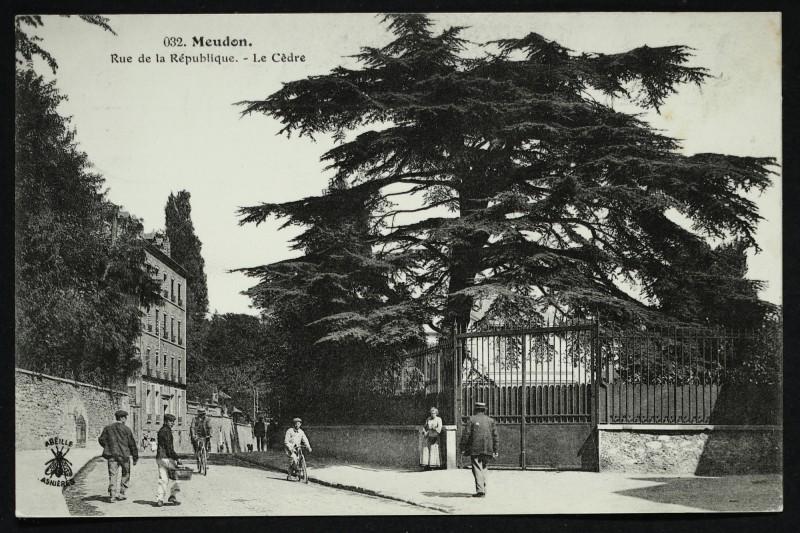 Carte postale ancienne Rue de la République - Le Cèdre à Meudon
