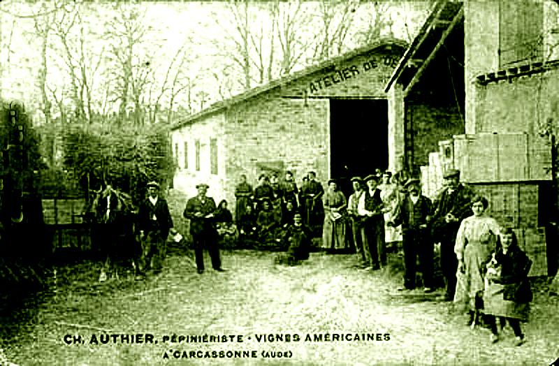 Carte postale ancienne Aude Ch. Authier pépiniéres vignes américaines Carcassonne à Carcassonne