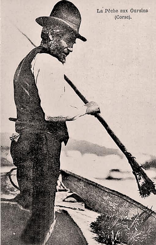 Carte postale ancienne Corse pêche aux oursins à