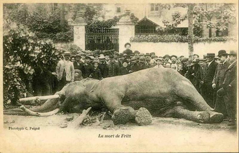 Carte postale ancienne La Mort de Fritz à Tours