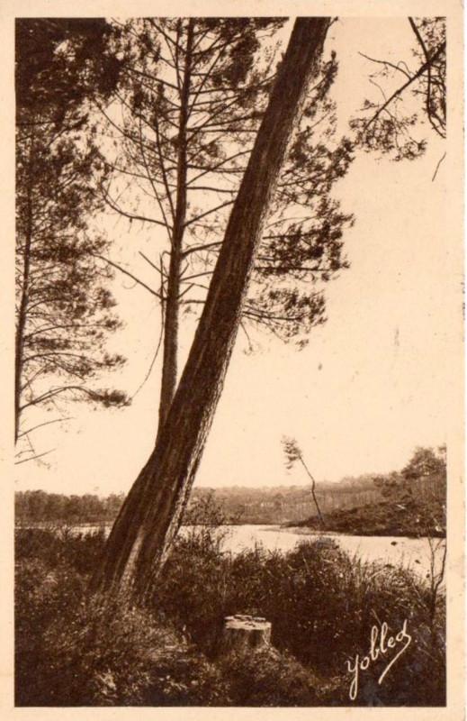 Carte postale ancienne Uza (Landes) - vue sur l'étang 2