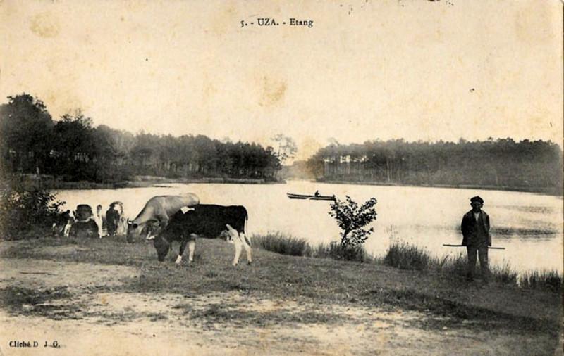 Carte postale ancienne Uza (Landes) - vue sur l'étang 3 à