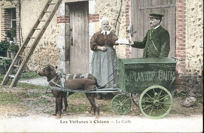 Carte postale ancienne Cart drawn by dogs à