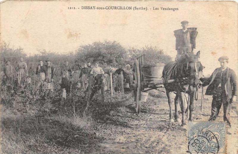 Carte postale ancienne Dissay Sous Courcillon Les Vendanges (cpa pas courante à Dissay-sous-Courcillon