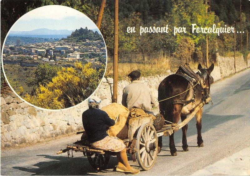 Carte postale ancienne Forcalquier Ane à Forcalquier