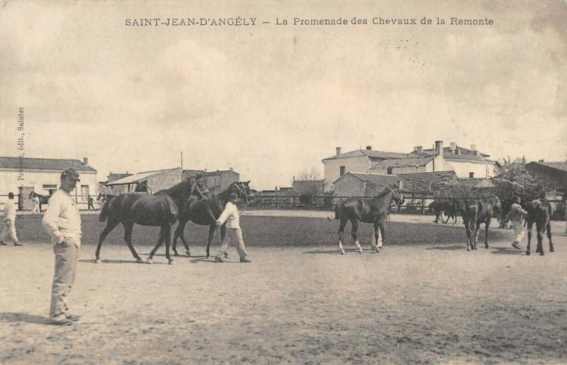 Carte postale ancienne Saint Jean D'Angely La Promenade Des Chevaux De La Remonte à
