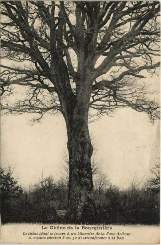 Carte postale ancienne Saint-Georges de Rouelley-Le Chene de la Bourginiere à Saint-Georges-de-Rouelley